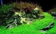 水族箱造景探讨日本岩组石风格水草缸