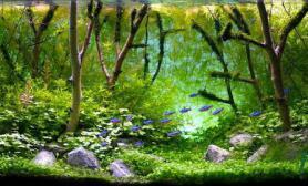 水草缸中如何用沉木来打造完美景色