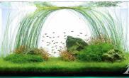 沉木青龙石淡水水草90CM尺寸设计06