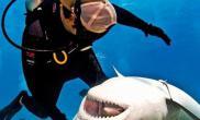 美潜水员与鲨鱼亲密相处(多图)