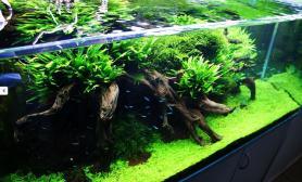 水草缸造景沉木水草泥化妆砂青龙石120CM尺寸设计69