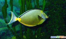 热带鱼怎样更顺利的饲养和繁殖(图)