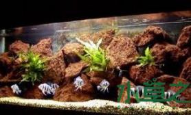 小型大自然水草缸创意水草造景水草缸快把大自然搬回家吧鱼缸水族箱鱼缸水族箱