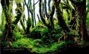 国外45cm水族箱树林主题草缸欣赏