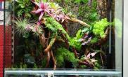 雨林水陆生态缸34