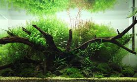 水草缸造景沉木水草泥化妆砂青龙石90CM尺寸设计72