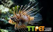 观赏鱼常见的饵料有哪些