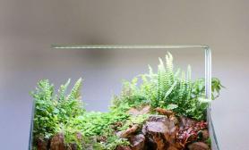 水草造景45 ×30cm水陆缸一枚