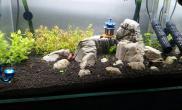 新开60龟纹石造景
