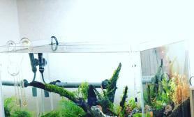 45cm 阴性水草造景