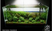 AndreCardoso的水族造景世界