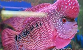 水族箱中光对鱼的影响