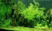 什么植物才属于水草(图)