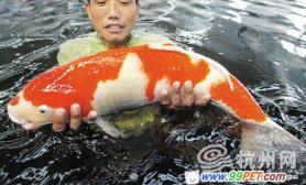 杭州出了条超级锦鲤(图)