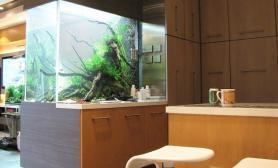 沉木青龙石造景缸与家装空间-32