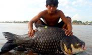 柬埔寨的罕见大鱼(图)