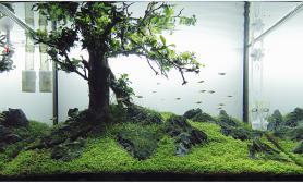 水草沉木+树枝、青龙石、砂积石造景之树木景观欣赏