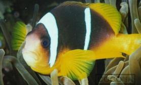 饲养海水观赏鱼 必备的设备