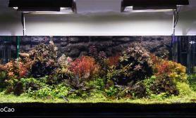 1.6米原始森林荷兰风格水草感觉草缸初成长