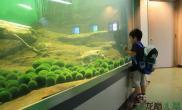 创意无极限水草缸超酷超炫的绿藻球