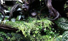 雨林缸专卖店Froschmichl工作室