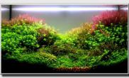Aquascape of the Month March: