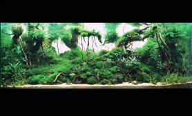 杜鹃根珊瑚MOSS超大缸造景案例