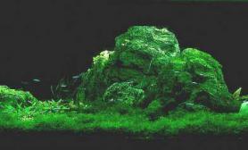 水草造景作品:水草造景(60cm)-115