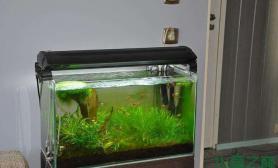 翻缸了水草缸这样的造景你喜欢吗?