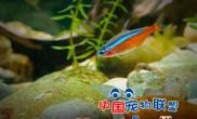 初次饲养观赏鱼如何选鱼