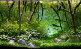 水草缸大量树枝造景沉木水草泥化妆砂青龙石120CM尺寸深林