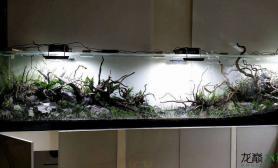 你家的鱼缸会拐弯吗?
