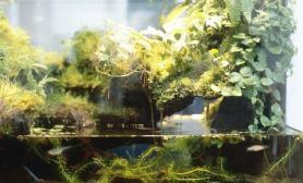 鱼缸里水藻泛滥的原因