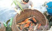 农民养殖观赏鱼致富(图)