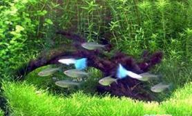 鱼融水养鱼心得之四(图)