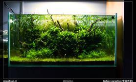 沉木青龙石水草造景90CM尺寸设计38