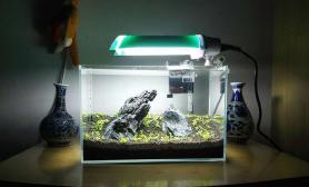 35cm方青龙石景缸