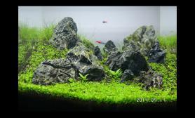 40方缸石景做了一些小调整鱼缸水族箱