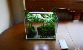 超简单的水陆小缸