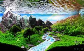 最逼真水草造景展(一)水草缸哪个才是你的最爱?