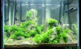 水草造景[水草造景篇]印象桂林