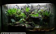 雨林水陆生态缸异宠天堂