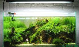 一个90cm的水草造景缸