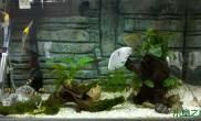 [交流]新手的鱼草缸,这些水草只有灯,没有泥和CO2能养得好吗?我的是成品缸