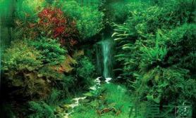 水族箱造景水草缸中瀑布的製作