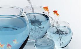 调节鱼缸水质常见方法(图)