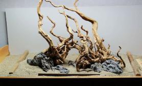 沉木之灵杜鹃根沉木骨架欣赏