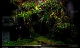 雨林水陆生态缸41