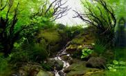 分享美丽的树枝造景草缸图片照片