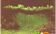 水草水陆生态缸欣赏莫内的花园